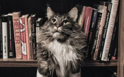 grey-and-white-long-coated-cat-in-middle-of-book-son-shelf-156321
